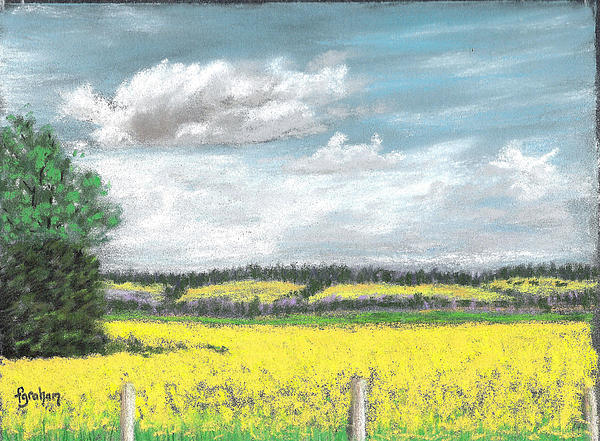 Golden Fields Of Alberta Print by Fiona Graham