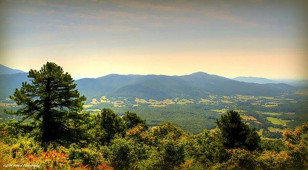 Debra Forand - Golden Hills