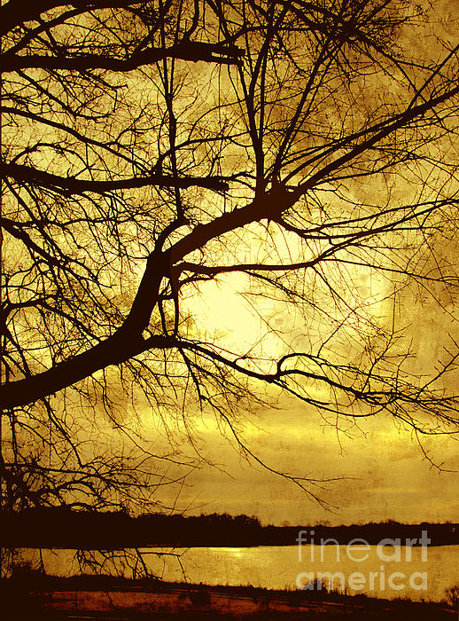 Golden Pond Print by Ann Powell