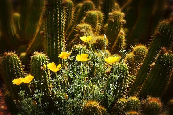 Saija  Lehtonen - Golden Poppies and Torch Cactus