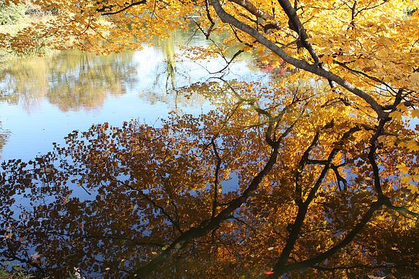 John Telfer - Golden Reflection