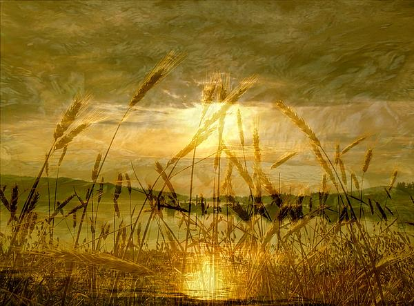 Golden Sunset Print by Barbara St Jean