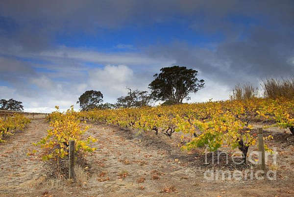 Golden Vines Print by Mike  Dawson