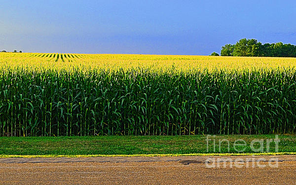 Luther   Fine Art - Golden Waves of Grain
