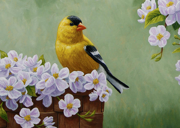 Goldfinch Blossoms Greeting Card 3 Print by Crista Forest
