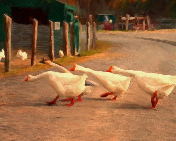 Goose Crossing Print by Michael Pickett