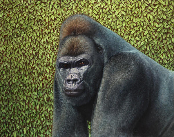Gorilla With A Hedge Print by James W Johnson