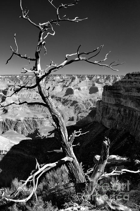 Grand Canyon Bw Print by Patrick Witz