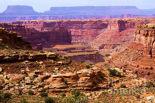 Grand Canyon Of Utah Print by Adam Jewell
