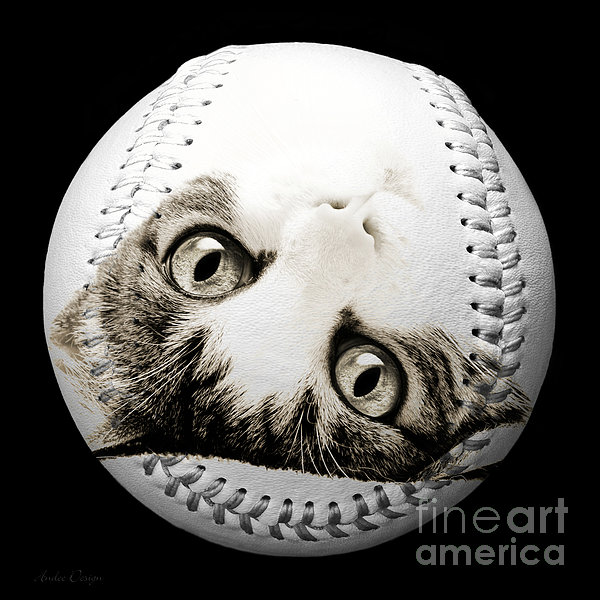 Grand Kitty Cuteness Baseball Square B W Print by Andee Design