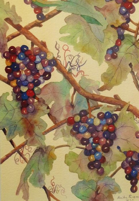 Anita Riemen - Grapes Again