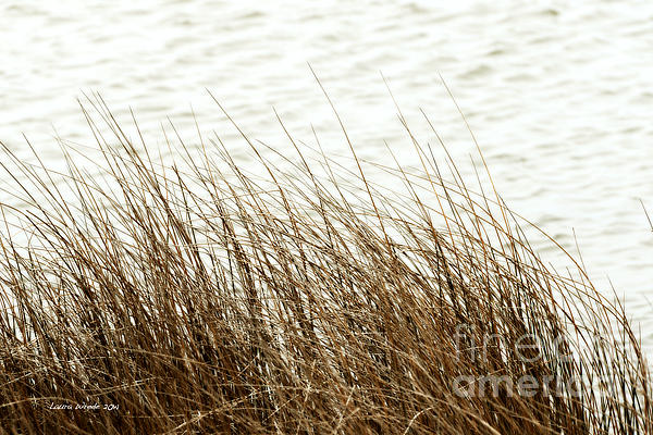 Grass Down By The Shore Of Virginia Beach Print by Artist and Photographer Laura Wrede