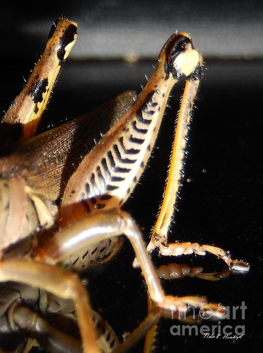 Grasshopper Legs Print by Nola Hintzel