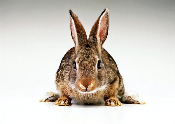 Gray Rabbit Bunny  Print by Lanjee Chee