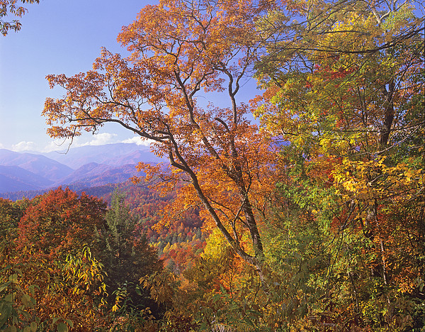 Tim Fitzharris - Great Smoky Mts from Blue Ridge Pkwy