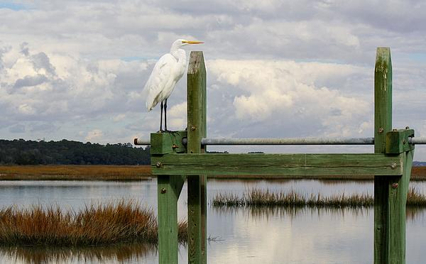 Great White Egret On The Marsh Print by Paulette Thomas