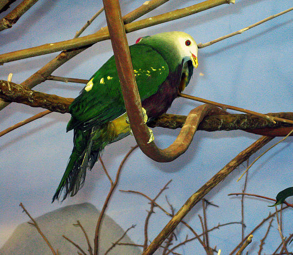 Green Bird Print by Larry Stolle
