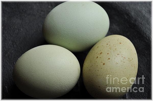 Green Eggs Print by Cheryl Baxter