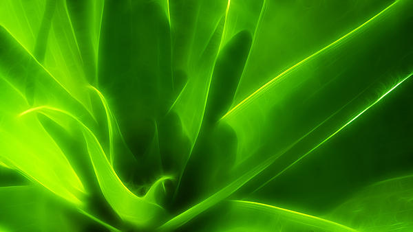 Green Flame Print by Suradej Chuephanich