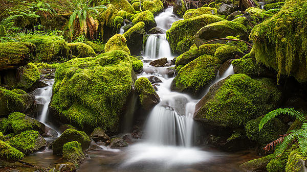 Pierre Leclerc Photography - Green moss stream in Olympic National park