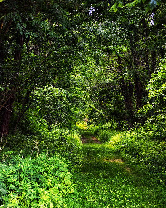 green path into the - photo #22