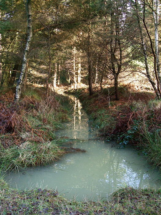 Jean Walker - Green reflections