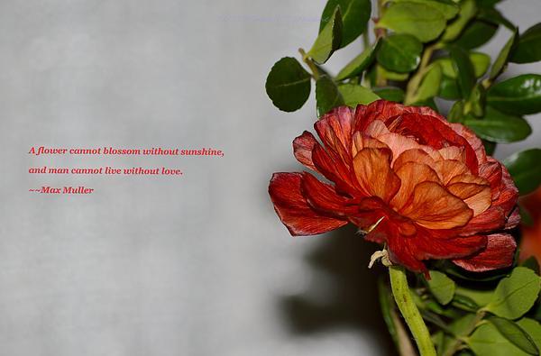Greeting Of Love Print by Sonali Gangane