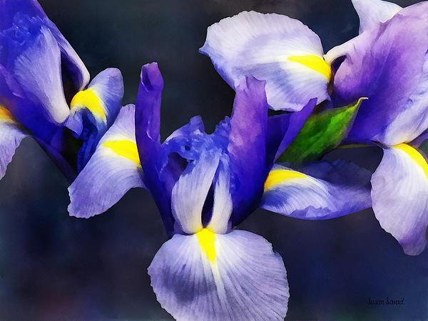 Group Of Japanese Irises Print by Susan Savad