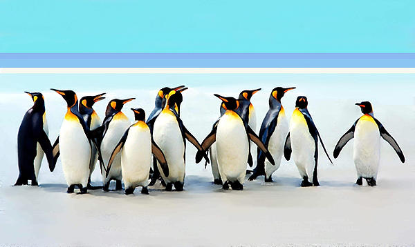 Group of penguins called