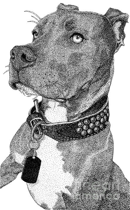 Isabelle Auger - Gunner the Pitbull Portrait