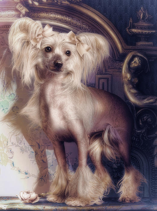 Hair Less Chinese Print by Cindy Grundsten
