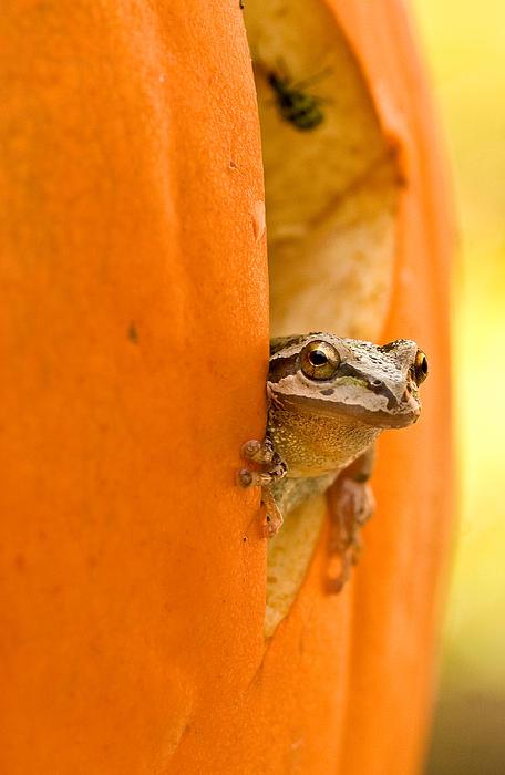 Jean Noren - Halloween surprise