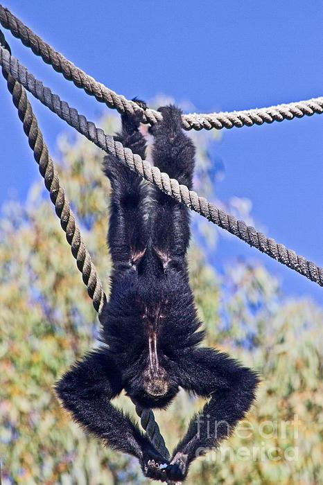 Miroslava Jurcik - Hanging