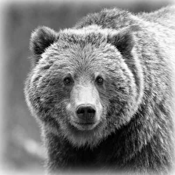 Stephen Stookey - Happy Bear