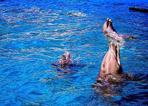 Happy Dolphins Print by Sandra Pena de Ortiz