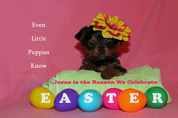 Happy Easter Print by Lorna Rogers Photography