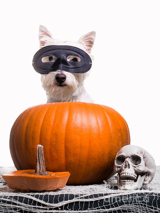 Happy Halloween Print by Edward Fielding