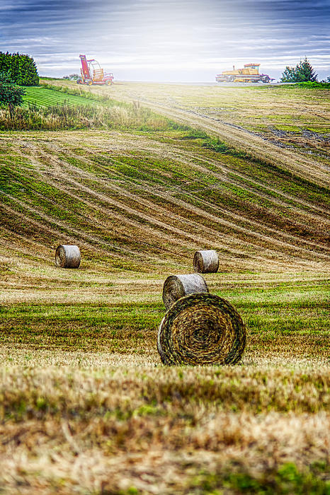 Harvest Day Print by Erik Brede