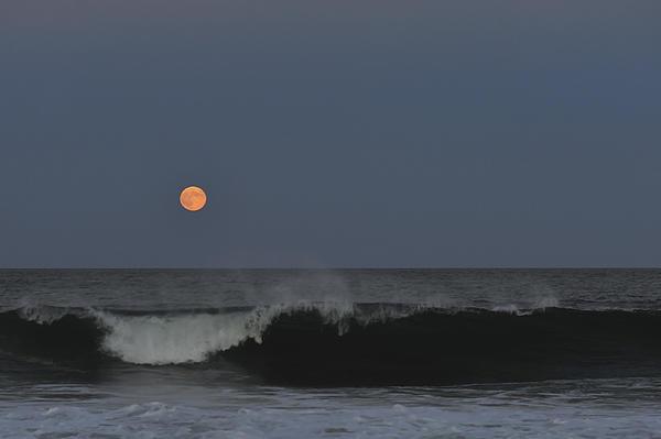 Terry DeLuco - Harvest Moon Seaside Park NJ