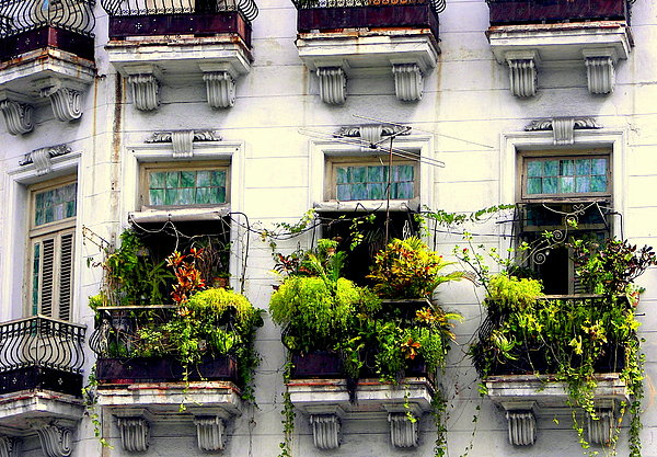 Havana Windows Print by Karen Wiles