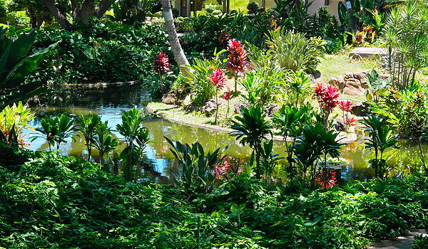 Hawaiian Cultural Garden Honolulu Airport By Michele Myers