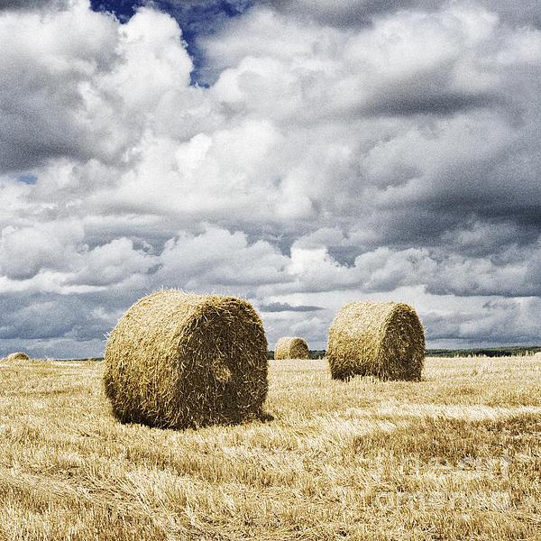 Haybales In A Field In England Uk Print by Jon Boyes