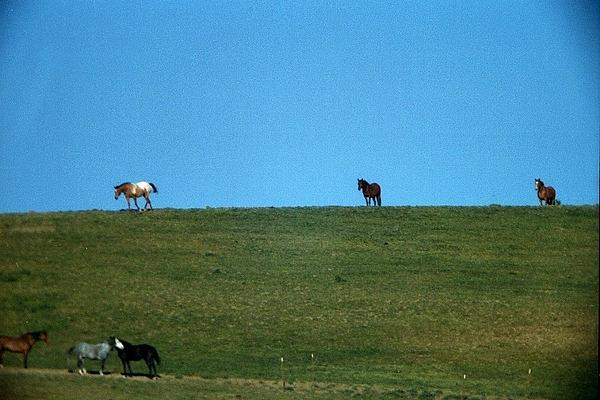 Elaine Burlew - Hayward Horses