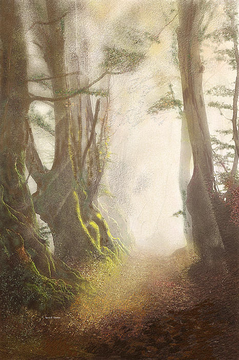 Angela A Stanton - Hazy Fall Forest Light