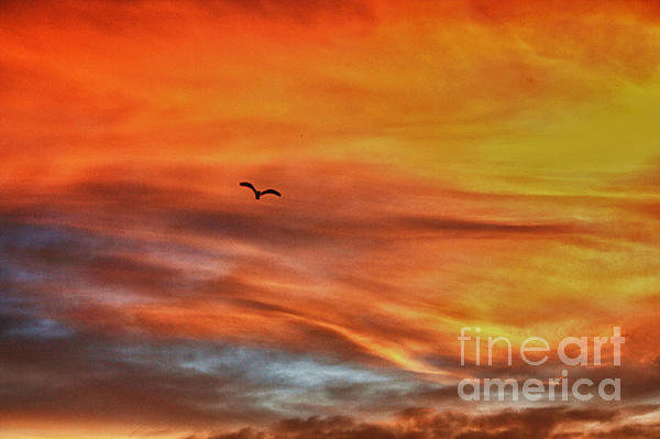 Chris Berry - hd 413- Sunset Series Lone Seagull
