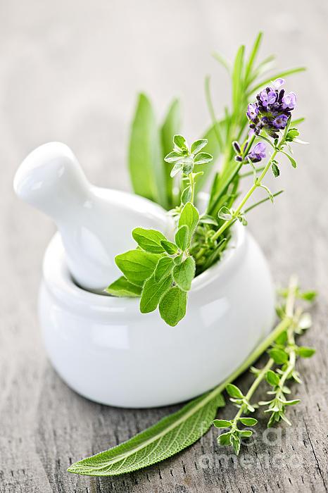 Healing Herbs In Mortar And Pestle Print by Elena Elisseeva