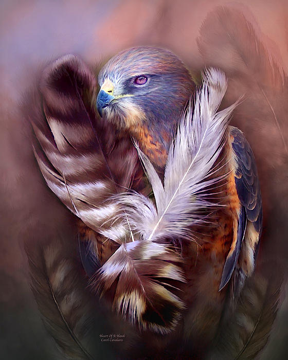 Heart Of A Hawk Print by Carol Cavalaris