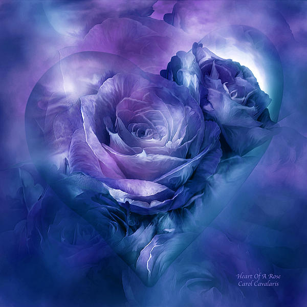 Carol Cavalaris - Heart Of A Rose - Lavender Blue