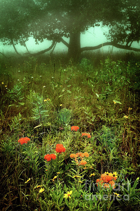 Dan Carmichael - Heaven in the Gloom I - Blue Ridge Parkway