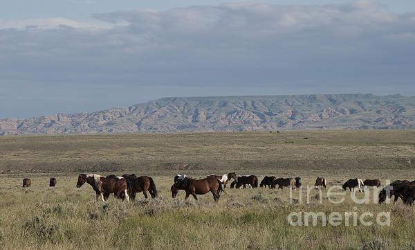 Herd Of Wild Horses Print by Juli Scalzi
